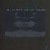 Descension Yellow Swans