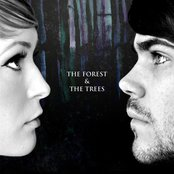 The Forest & The Trees
