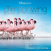 album Les Ailes Pourpres by The Cinematic Orchestra