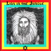 Lion In The Jungle