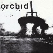 Orchid / Pig Destroyer