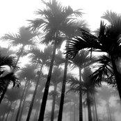 Tropical Daze