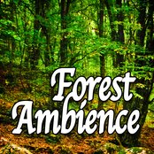 Forest Ambience (Nature Sounds)