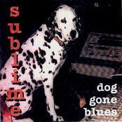 Dog Gone Blues
