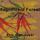 Magnificent Forest