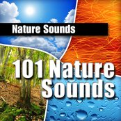 101 Nature Sounds