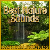 Best Nature Sounds (Nature Sound)