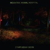 Startled By Deer