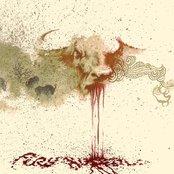 Fury Buffalo