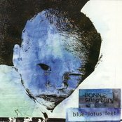 Blue Lotus Feet