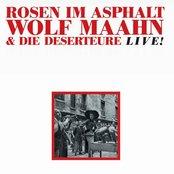 Rosen Im Asphalt