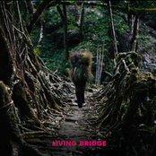 Living Bridge (Disc 1--No Crossfades)