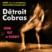 Mink Rat or Rabbit