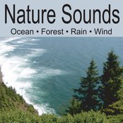 Nature Sounds: Ocean Waves, Forest Sounds, Rain, Soft Breezes Wind