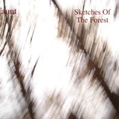Sketches Of The Forest