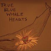 True Blue Whale Hearts
