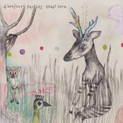 okapi horn
