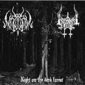 Night on the Dark Forest