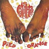 Pied orange