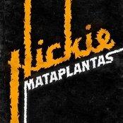 Hickie