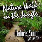 Nature Walk in the Jungle (Nature Sounds)