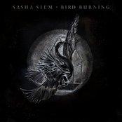 Bird Burning