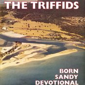 Born Sandy Devotional