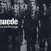 We Are the Pigs