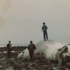 Image for 'Sea Glasses'