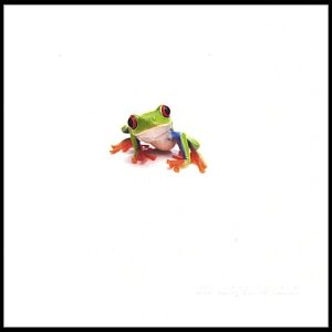 Image for 'The Tangerine Toad'
