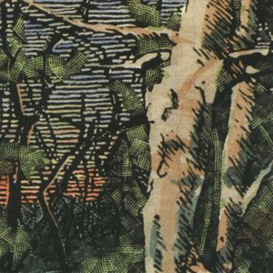 Image for 'Asleep Many Years in the Wood'