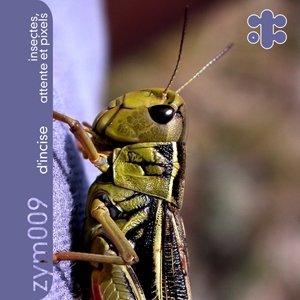 Image for 'Insectes, Attente et Pixels'