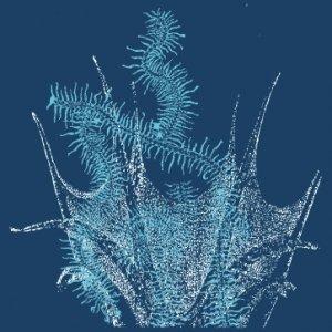 Image for 'prostokvasha'