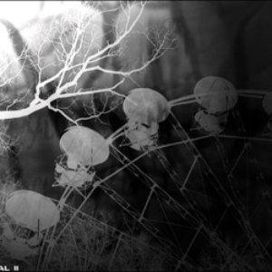 Imagen de 'senordwols, the insidious ominous'
