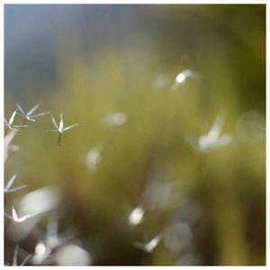 Image for 'REM.REM'