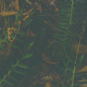 Bild för 'Cursory Asperses'