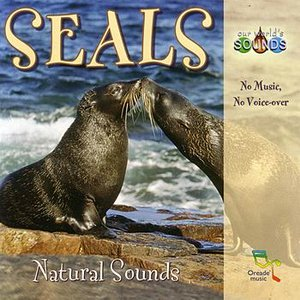 Image for 'A minor territorial dispute breaks out between a few sea lions.'