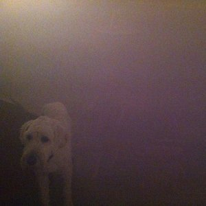 Image for 'Dog in the Fog'