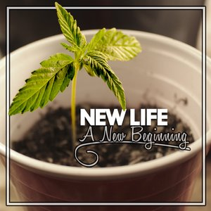 Image for 'A New Beginning'