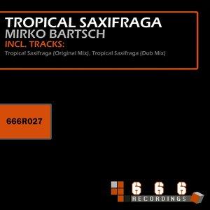 Image for 'Tropical Saxifraga'