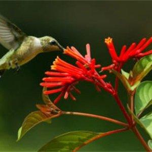Image for 'Kolibries'