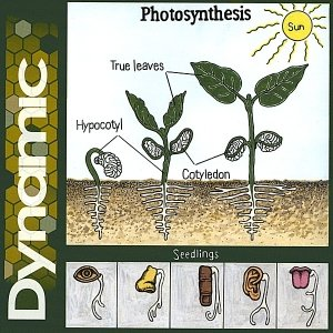 Image for 'Photosynthesis'