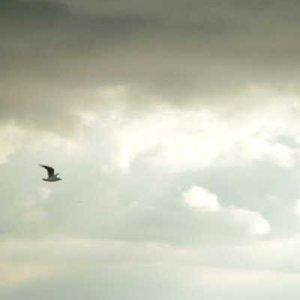 Bild für 'Unknown Album'