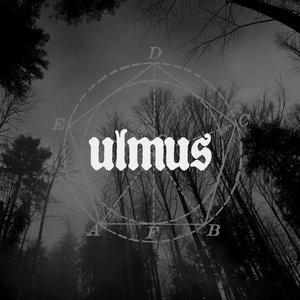 Image for 'Ulmus'