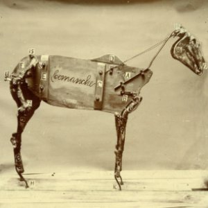 Image for 'The Horse Comanche'