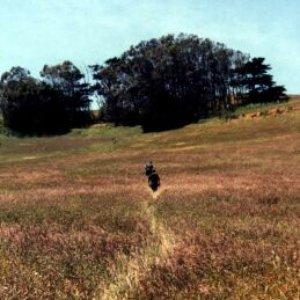 Bild för 'Horticultural Compass'
