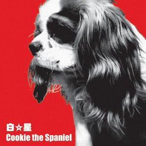Image for 'Cookie The Spaniel'