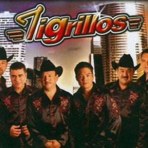Image for 'Tigrillos'