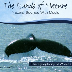 Image for 'Symphony Of Whales'