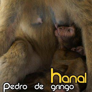 Image for 'Pedro De Gringo'